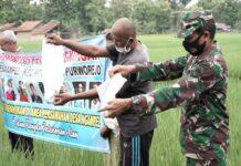 TEBAR. Komunitas Peduli Lingkungan Desa Ngampel saat menebar benih nila di area pesawahan desa setempat,