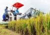 PANEN. Dengan menggunakan mesin panen, tanaman padi lebih cepat dipanen.