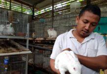 TUNJUKKAN: Habib saat menunjukkan salah satu indukan kelinci di kandang ternak miliknya. (Foto: IST)